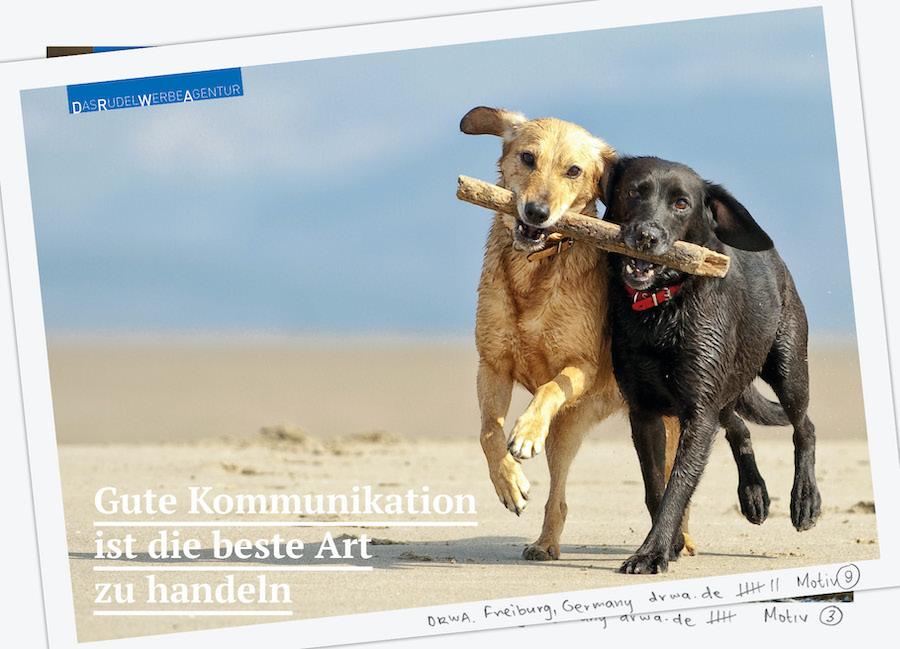 DRWA Das Rudel Werbeagentur Freiburg > Gute Kommunikation ist die beste Art zu handeln - Herbst 2020